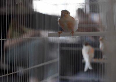 Fragment VI : Les oiseaux